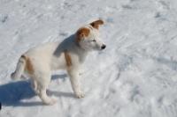 En søt liten hund